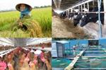 Hướng dẫn xác định rủi ro được hỗ trợ phí bảo hiểm nông nghiệp