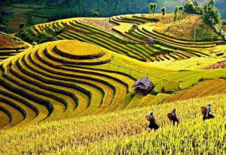 Bảo đảm đủ lương thực, thực phẩm tiêu dùng trong nước